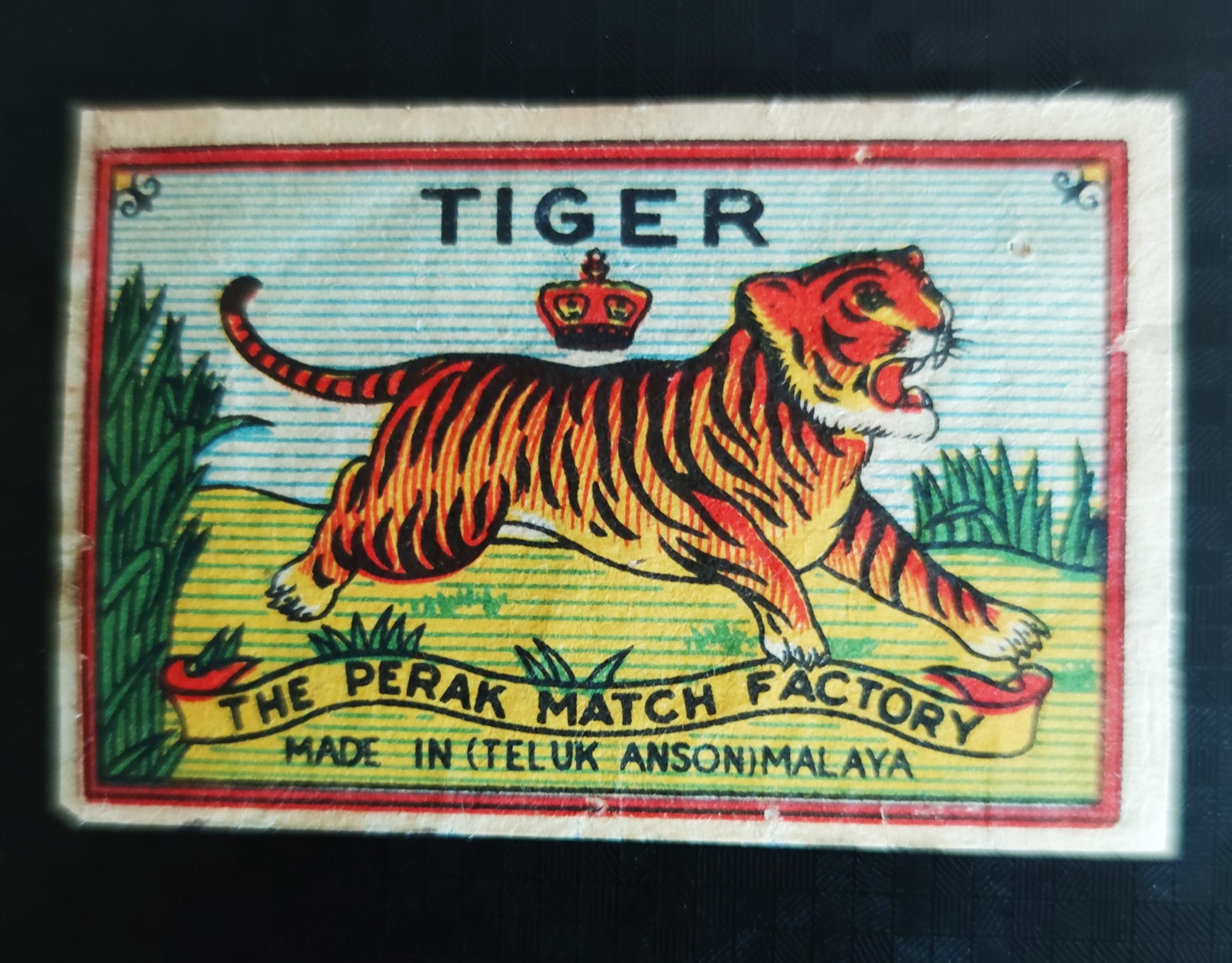 Tiger, 54 x 35 mm